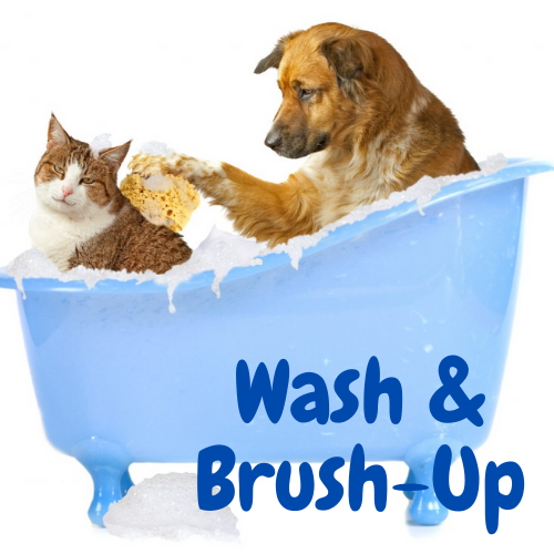 Wash & Brush-up